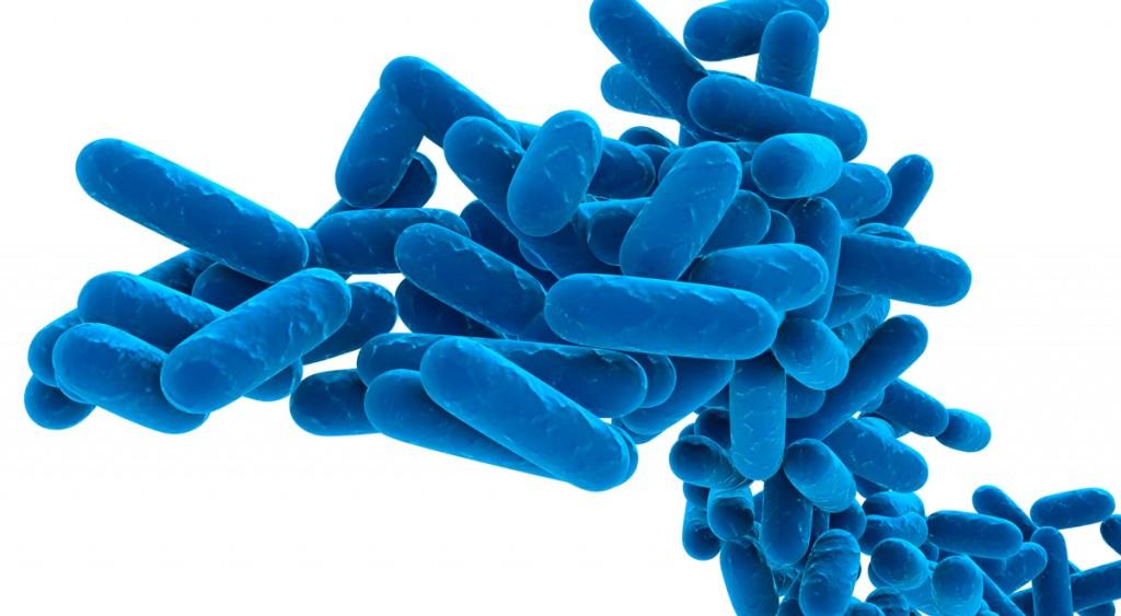 probiotikumok_lacto
